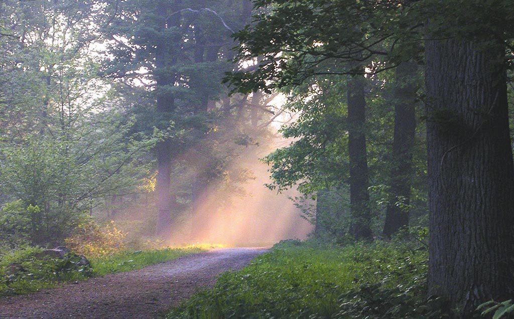 Forêt de fontainebeau avec levé de soleil, rayons rouges à travers les arbres