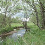 Rivière et ripisylve