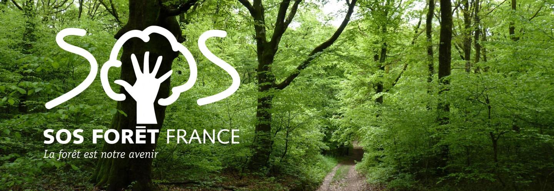 Banière SOS foret avec une belle forêt de feuillus et chemin central, plus logo SOS Forêt.