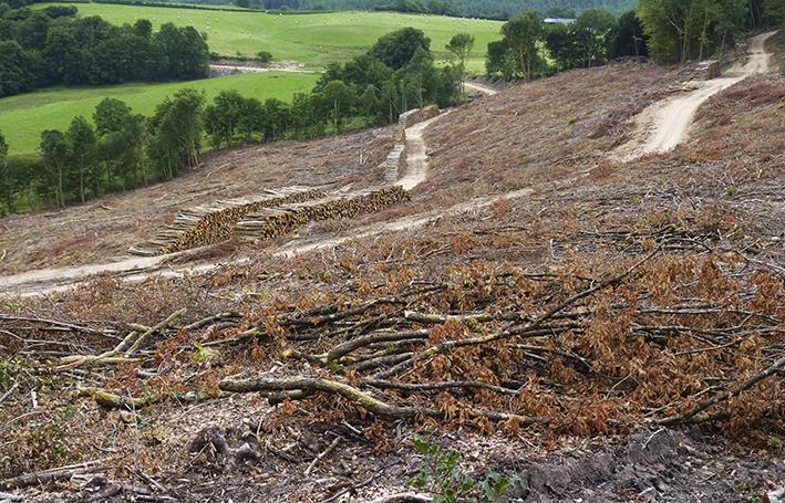 coupe rase de forêt de feuillus avec fond de prés vert