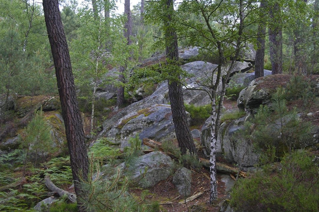 Forêt de Fontainebleaux et rochers-2