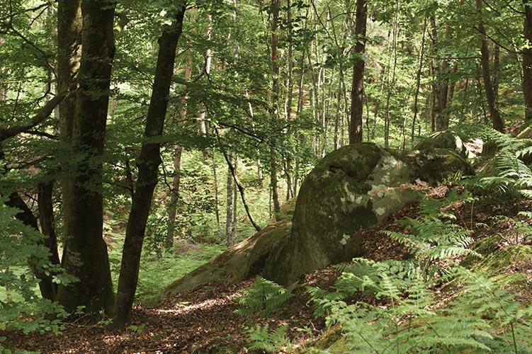 Forêt de Fontainebleaux et rochers