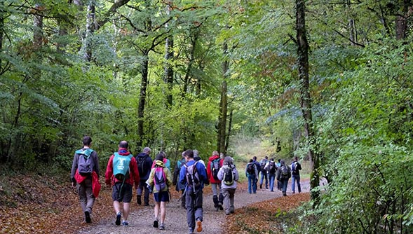 Marcheurs pour la forêt ONF-2