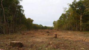 La commission d'enquête parlementaire citoyenne sur la forêt délocalisée au bois de Latingy