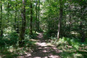 La forêt publique, bien commun ou startup ?