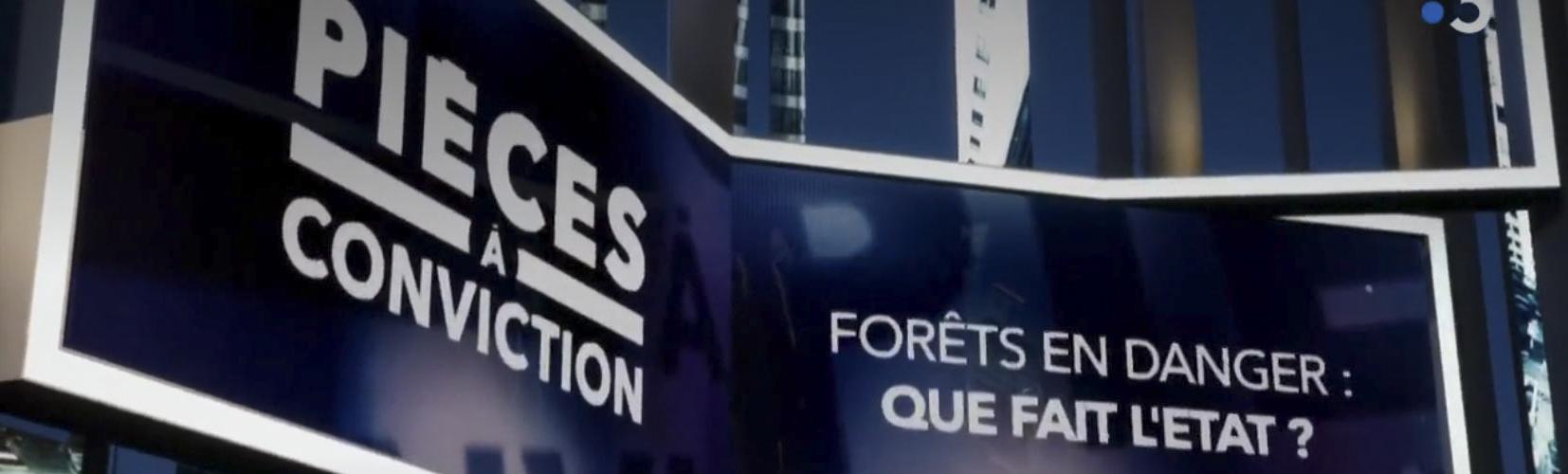 """France 3 : un """"Pièces à conviction"""" remarquable sur la forêt"""
